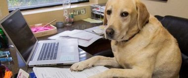 sale in affitto in business center da cani